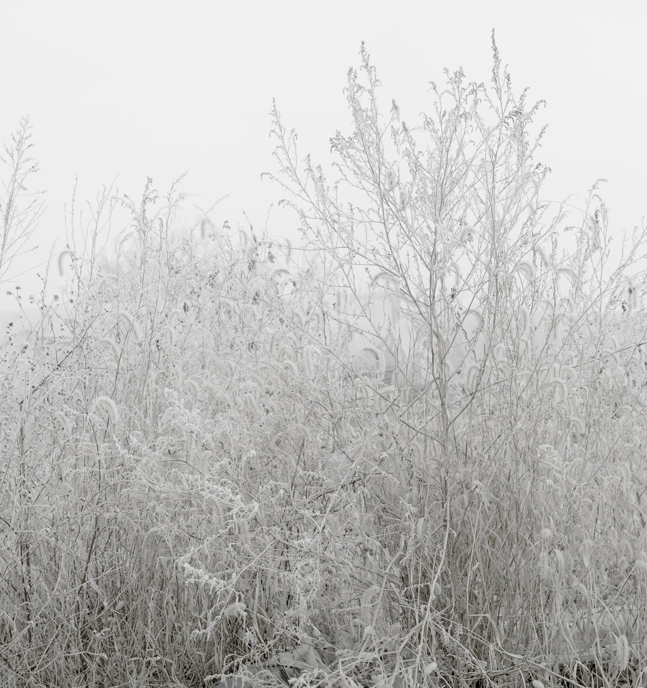 Honggoo Kang, Mist and Frost 1, Digital Print, 108x92cm, 2012, ONE AND J