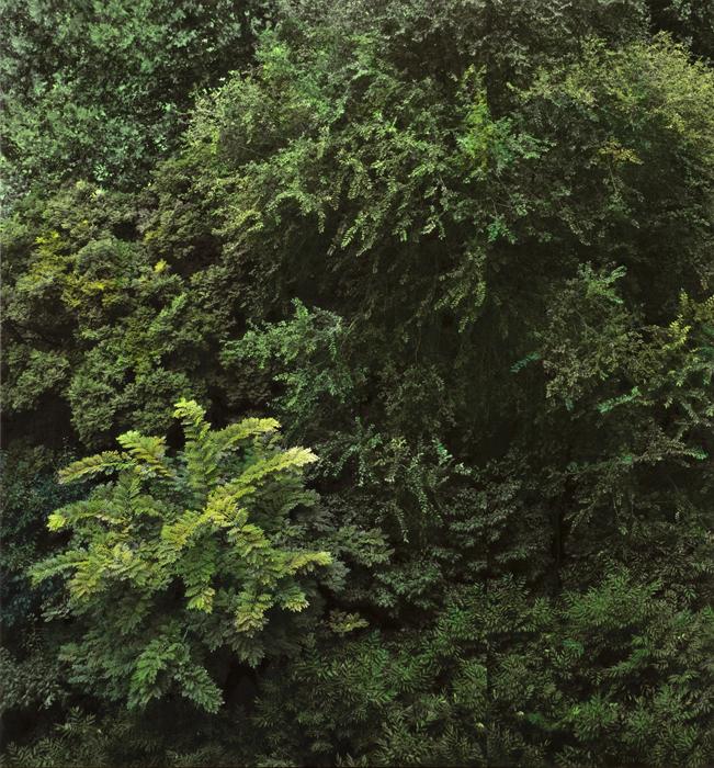 Honggoo Kang, Study of Green- Grove, Acrylic on pigment print, 112x120cm, 2012