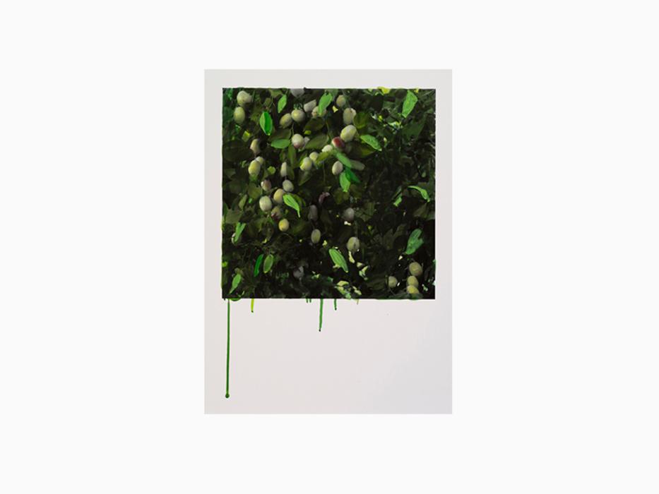 Honggoo Kang, Study of Green- Jujube, Acrylic on pigment print, 76x56cm, 2012