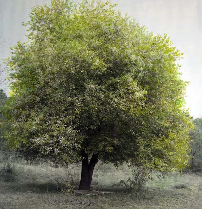 Honggoo Kang, Study of green - spring, Acrylic on pigment print, 117x112cm, 2011