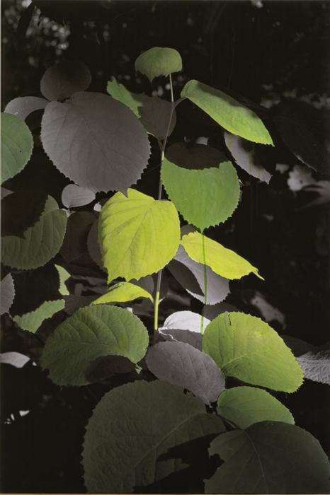 Honggoo Kang, Study of green - wide leaf, Acrylic on pigment print, 90x134cm, 2012