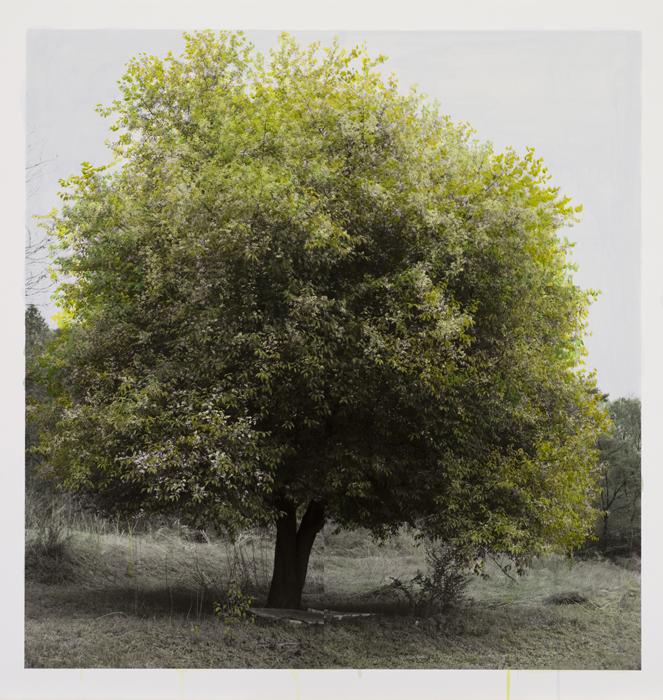 강홍구, 녹색에 대한 연구-봄, 피그먼트 프린트, 117x112cm, 2011
