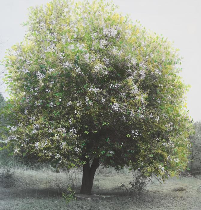 강홍구, 봄의 녹색에 대한 연구 (Ver. 1 Set #1), 피그먼트 프린트, 106x102cm, 2015, ONE AND J