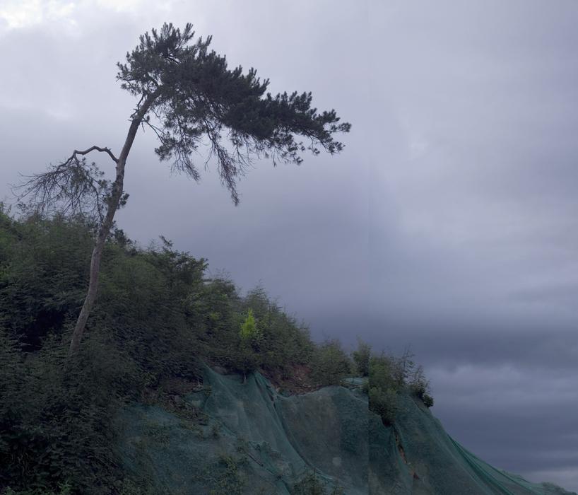 강홍구, 소나무, 디지털 사진 & 프린트, 125x107cm, 2009