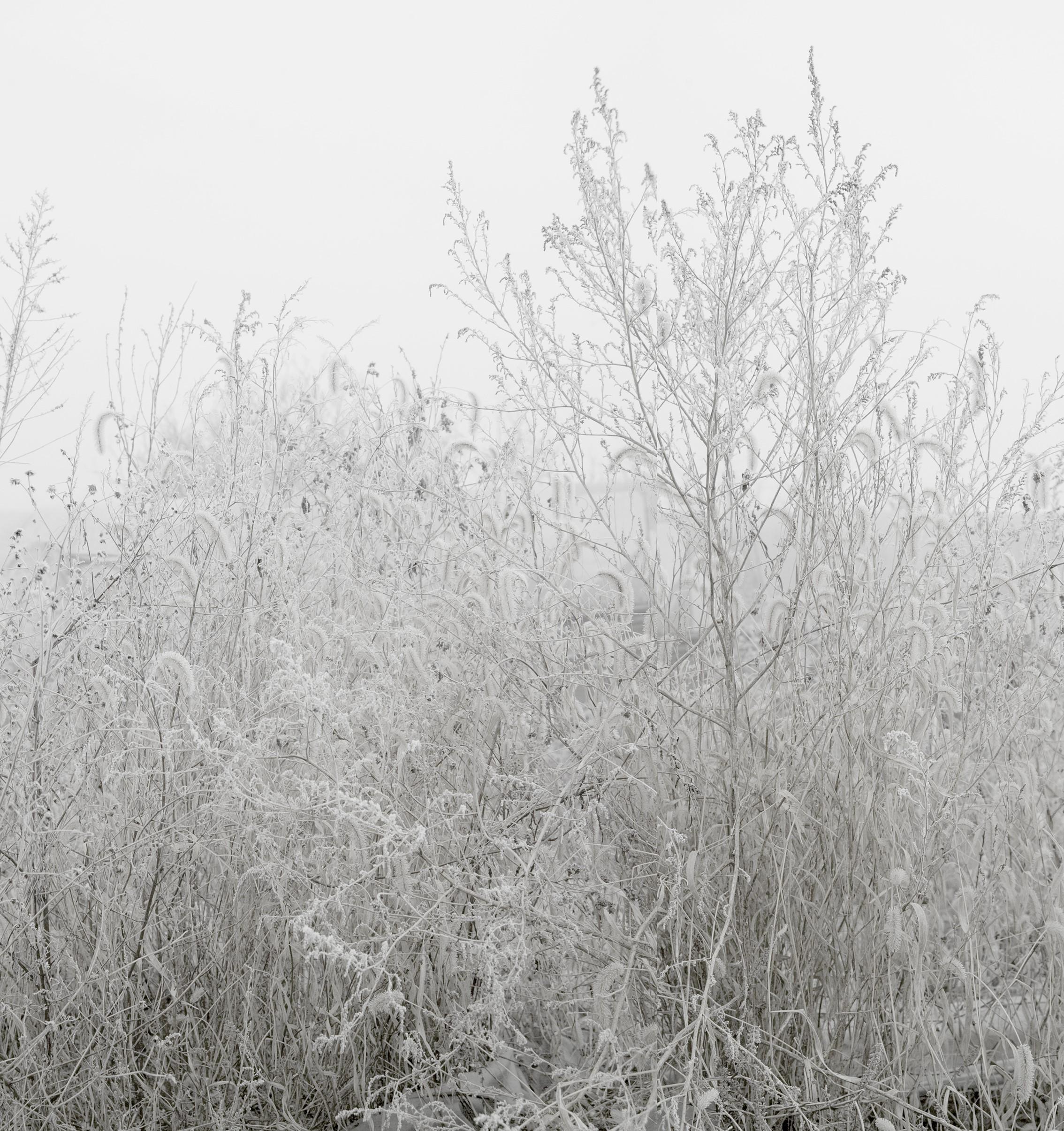 강홍구, 안개와 서리 1, 디지털 프린트, 108x92cm, 2012
