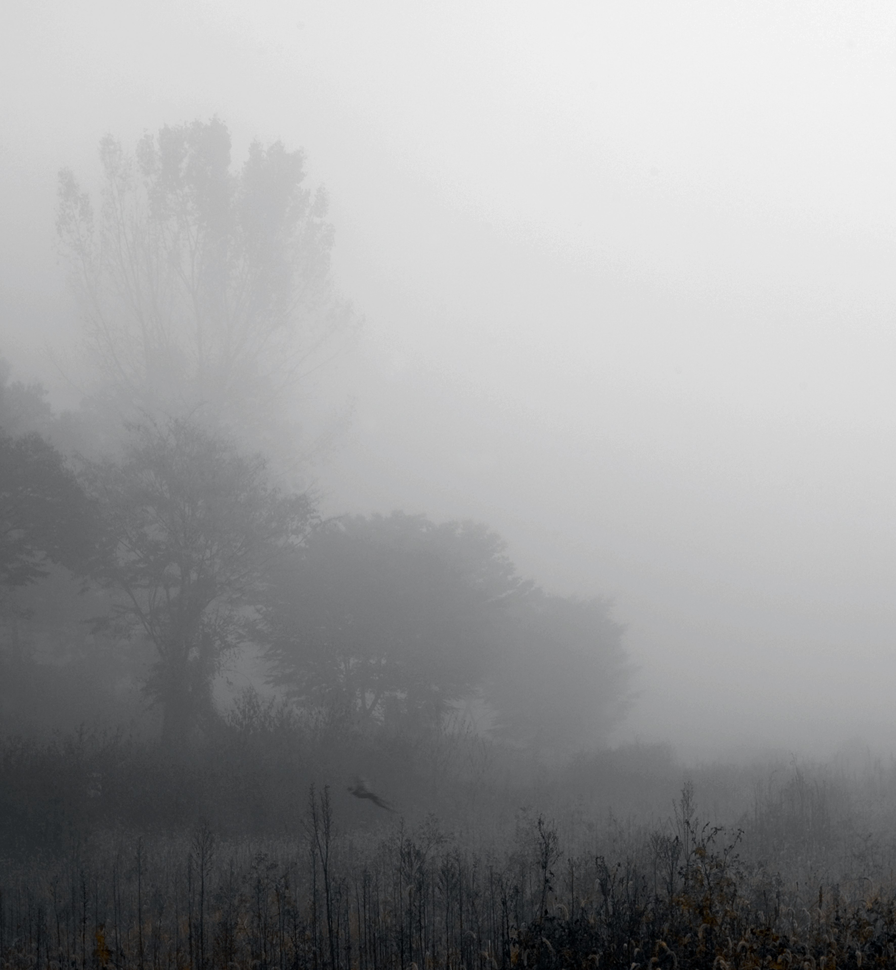 강홍구, 안개와 서리 34, 디지털 프린트, 55x51.4cm, 2012
