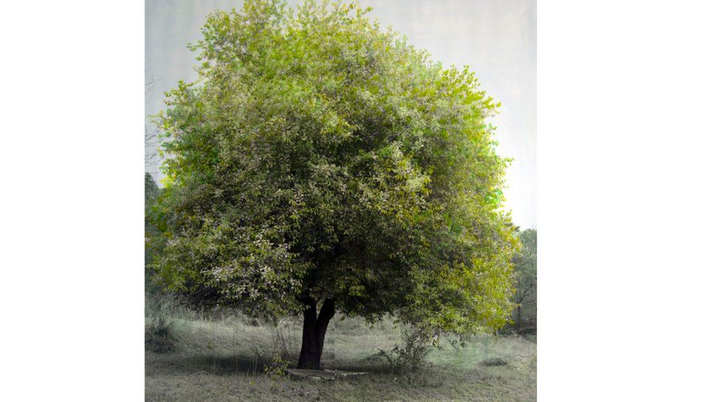 강홍구, 녹색 연구 - 봄, 피그먼트 프린트에 아크릴, 117x112cm, 2011