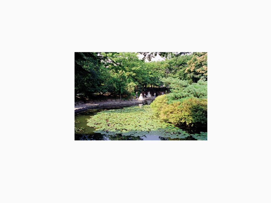 김윤호, 봄이 오거든(11), 디지털 C 프린트, 65x50cm, 2002